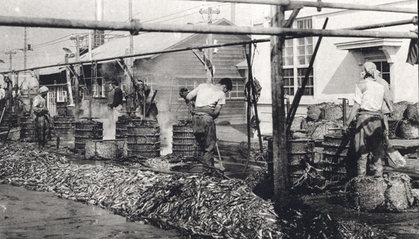 Fish Oil Factory in Cheongjin Port  Photograph Postcard